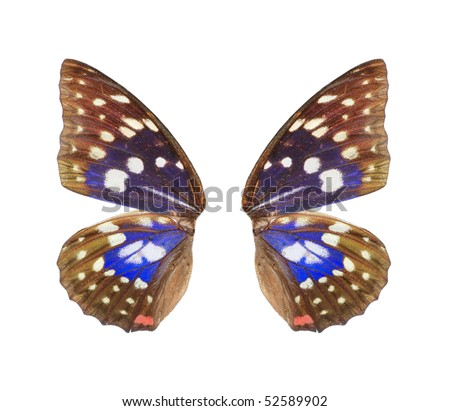 butterfly wing isolated in white background