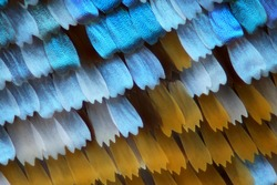 Butterfly wing scales at 40x magnification. Focus stacked image.