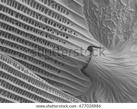 Butterfly wing scanning electron microscope