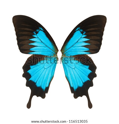 Butterfly wings, Isolated on white background - stock photo