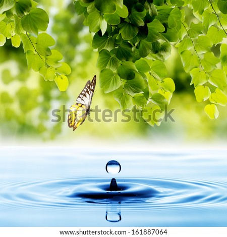 Stock Photo Butterfly with green leaf and water drop