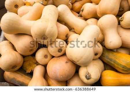 Butternut Squash #636388649