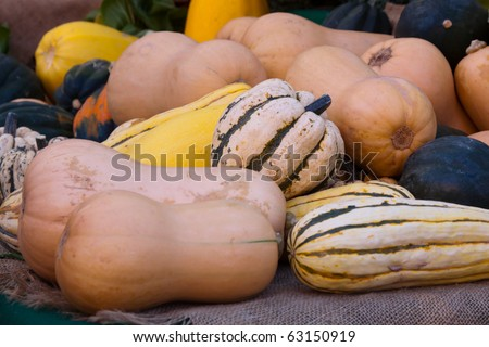 Butternut Squash and Other Gourds