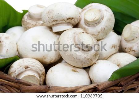 Button mushroom on a green leaf