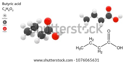 Butyric acid, abbreviated BTA, is a carboxylic acid. Molecular Formula: C4H8O2. 3D illustration. Isolated on white background. The molecule is shown from 2 sides.
