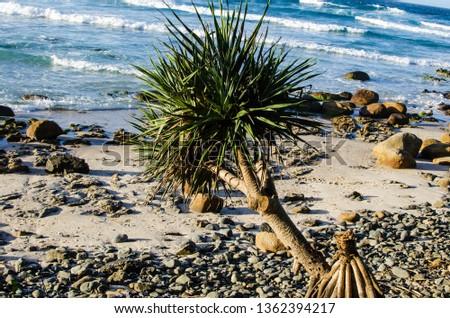 Byron Bay beach #1362394217