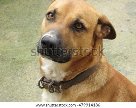 cão olhando Foto stock ©