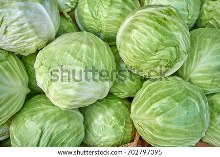 cabbage from field. cabbage background