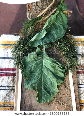 Cabbage leaf (Brassica oleracea var. capitata) on wood with pine leaves and herb (Lahana Yapragi in Turkish) Stok fotoğraf ©