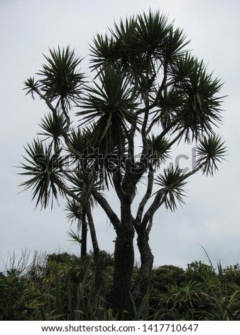 Cabbage tree standing tall in New Zealand #1417710647