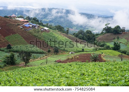 cabbages farmlands mountain view #754825084