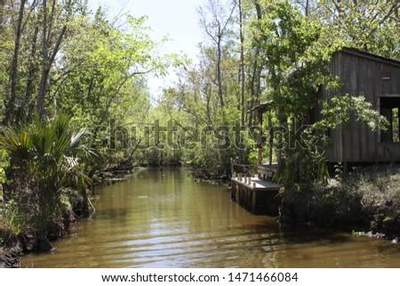 Cabin In A Louisiana Swamp