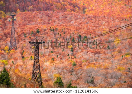 Cable car pillar in autumn ,focus to two pillar line on colorful trees forest on top view of Hakkoda Ropeway, at Hakkoda Mountains in autumn season in Aomori, Tohoku Japan