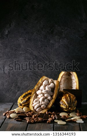 Cacao fruit decorated with fresh and dry cacao beans and cacao products: cacao butter and chocolate. Copy space