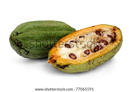 cacao fruits isolated against white background.