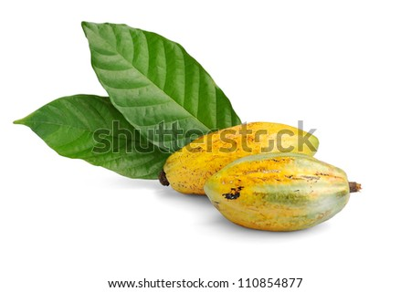 Cacao fruits isolated against white background, selective focus.