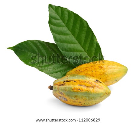 Cacao fruits with leaf isolated against white background, selective focus.