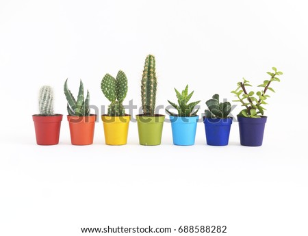 Cacti and succulents in pots. The colors of the rainbow. White background.