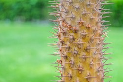 Cacti grow among greenery background