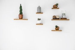 Cacti on wooden shelves in empty interior with copy space on white wall