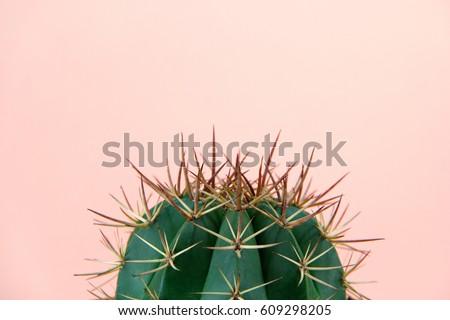 Cactus - Shutterstock ID 609298205