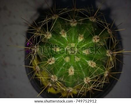 cactus  #749752912