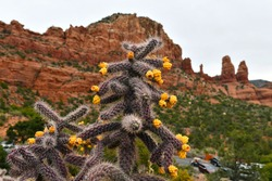 Cactus and flowers in focus with red rock background purposely blurred, Sedona Arizona