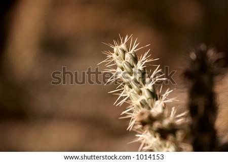 Desert Plants Cacti. Desert+plants+cactus