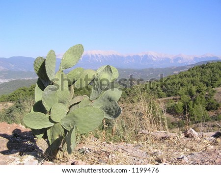 cactus and mountains