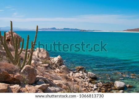 Cactus and mountains of Isla Espiritu Santo, La Paz Baja California Sur, Sea of Cortes. MEXICO