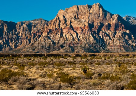Cactus and red Rock Canyon - stock photo