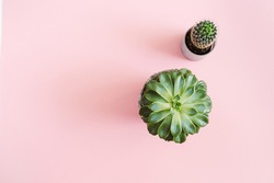 Cactus and succulent flowers on pink background. Flat lay, top view minimal concept.