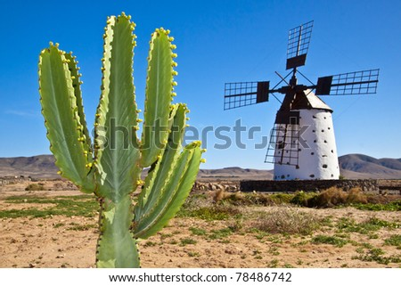 Cactus and the traditional stony windmill at the Fuerteventura