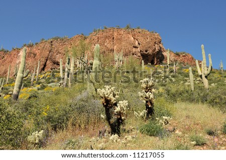 Cactus and yellow wildflowers, Tonto National Monument near Roosevelt, Arizona