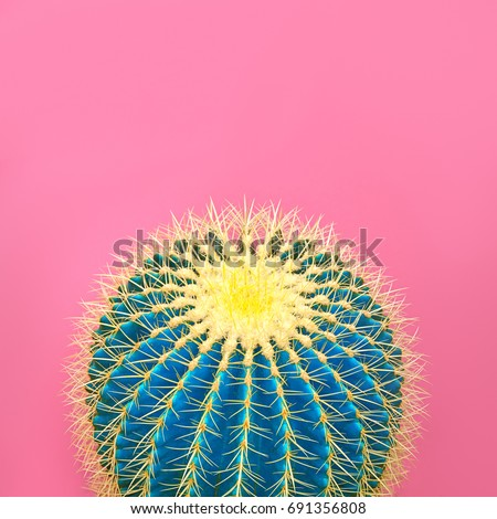 Cactus. Art Gallery Fashion Design. Minimal Stillife. Blue Mood. Trendy Bright Summer Colors. Creative Unusual Style. Concept, pink background. Detail.