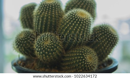 Cactus cactus thorns close up thorns of cactus cactus background