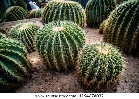 Cactus, Cactus thorns, Close up thorns of cactus, Cactus Background #1194678037