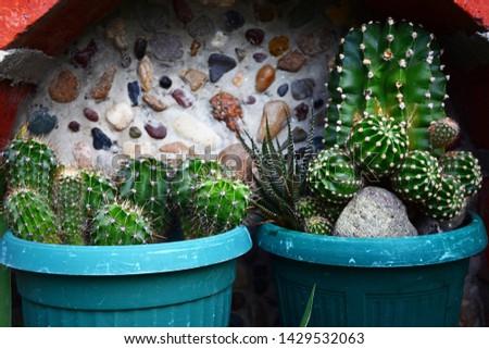 Cactus, Cactus thorns, Close up thorns of cactus, Cactus Background   #1429532063