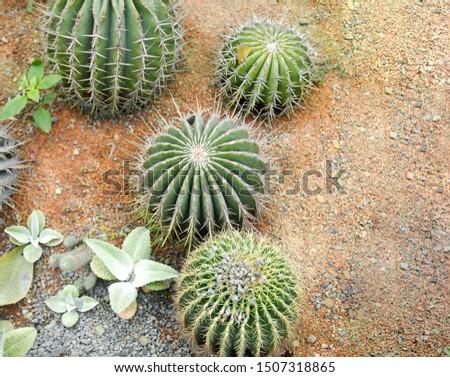 Cactus, Cactus thorns, Close up thorns of cactus, Cactus Background   #1507318865
