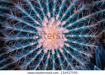 cactus close up #116417590