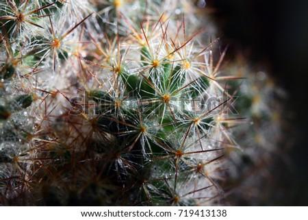 cactus close up #719413138