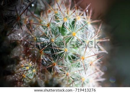 cactus close up #719413276