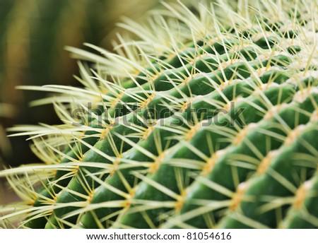 cactus close up - stock photo