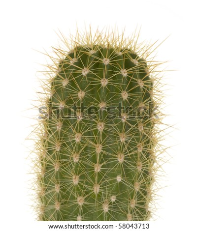 Cactus close up, macro view, isolated on white background