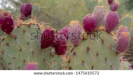 cactus closeups at sonora desert, arizona side