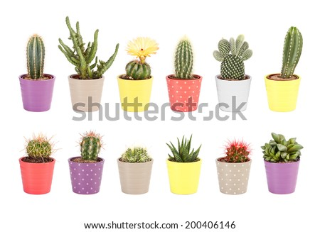 Cactus collection isolated on white background. Aloe and other succulents in colorful ceramic pots