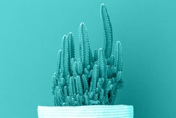 Cactus Fairy Castle in multiple rows on trendy blue background. Environment friendly summer or spring time mock up monochromatic with copy space