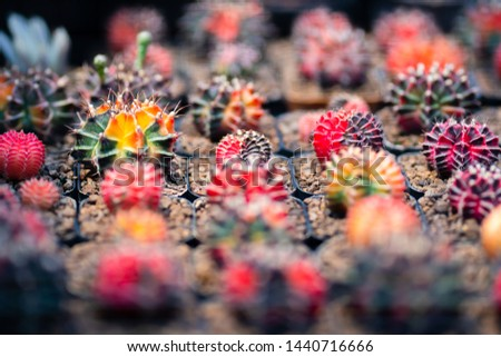 Cactus farm with close-up of succulent and cactus collection in pot. It' s natural background from little plants.  #1440716666