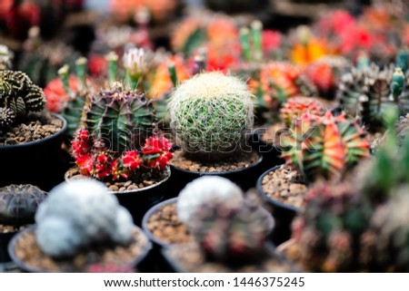 Cactus farm with close-up of succulent and cactus collection in pot. It' s natural background from little plants.  #1446375245