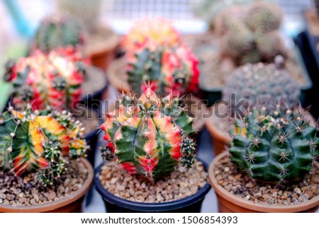 Cactus farm with close-up of succulent and cactus collection in pot. It' s natural background from little plants.  #1506854393